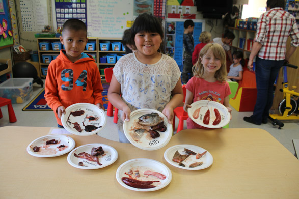 Elementary biology experiment in Stinkine