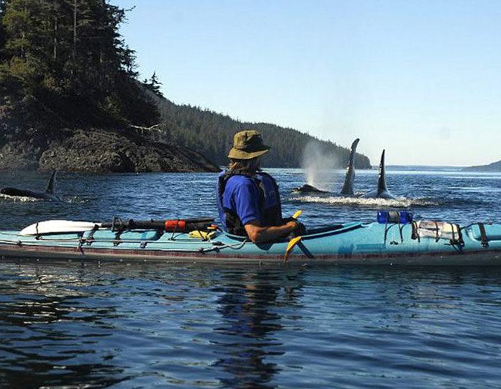 Vancouver Island North Kayaker